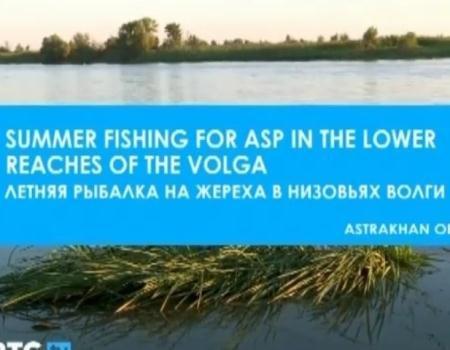 Летняя рыбалка на жереха в низовьях Волги   (2011) TVRip