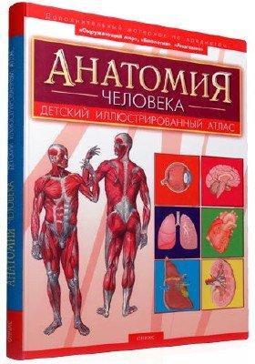 Анатомия человека. Детский иллюстрированный атлас