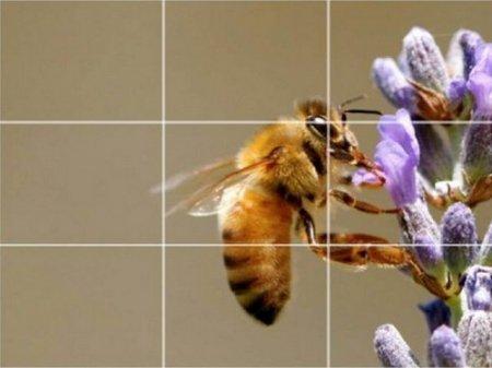 Видео уроки о фотосъемке. Основы композиции в фотосъемке (2013)