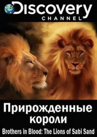 Прирожденные короли  / Brothers in Blood: The Lions of Sabi Sand  (2015) HDTVRip