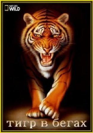 Тигр в бегах  / Tiger On The Run  (2015) HDTVRip