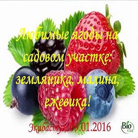 Любимые ягоды на садовом участке - земляника (2016) WEBRip