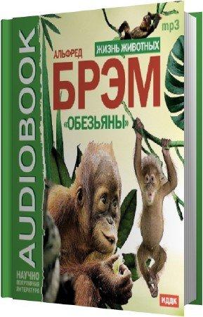 Брэм Альфред - Жизнь животных. Обезьяны (Аудиокнига)