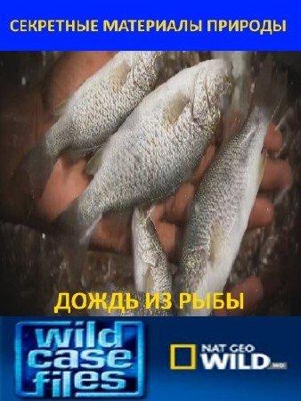 Дождь из рыбы (2012) HDTVRip