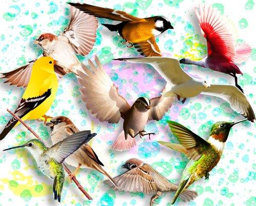 Фотошоп png - Птички