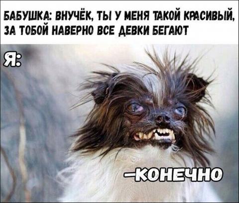 Смешные животные и звери, поднимающие людям настроение (34 фото)