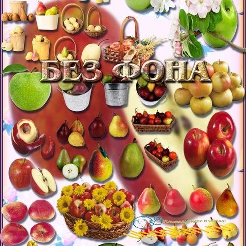 Клипарты на прозрачном фоне - Яблоки и груши
