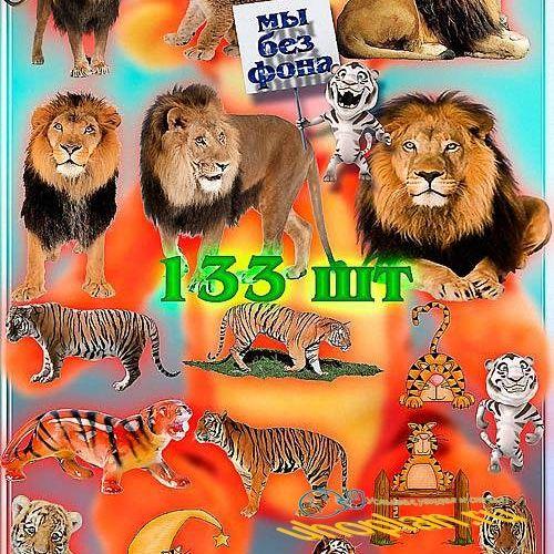Клипарты на прозрачном фоне - Львы и тигры