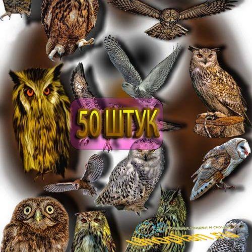 Клип-арты для фотошопа на прозрачном фоне - Разные виды сов