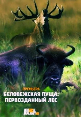Беловежская пуща: первозданный лес  / The Primeval Forest of Belovezhskaya Pushcha  (2015) TVRip (720p)