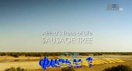 Древо жизни (2015) HDTV фильм 1   Колбасное дерево