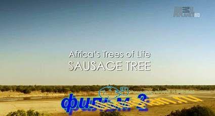 Древо жизни (2015) HDTV фильм 2 Верблюжья акация