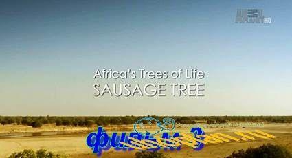 Древо жизни (2015) HDTV фильм 3  Дерево Марула