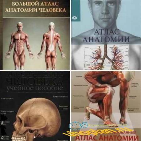 Атлас анатомии человека. Сборник (5 книг)