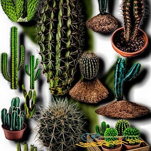 Клипарты для фотошопа на прозрачном фоне - Колючие кактусы