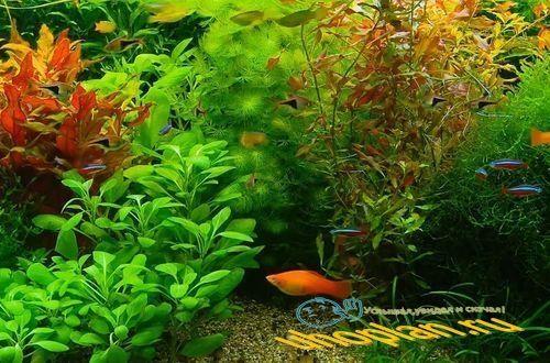 Живые обои на рабочий стол Aquarium (Аквариум) (live wallpaper)