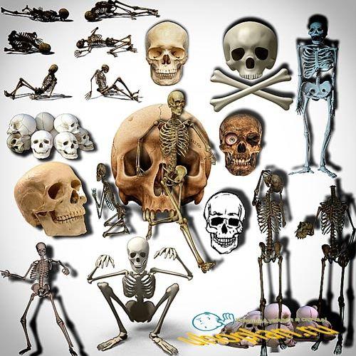 Фотошоп Png клип-арты - Черепа и кости